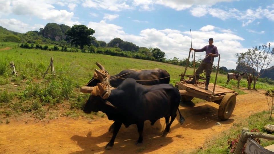 Cuba countryside