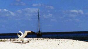 Coral Sea Beach