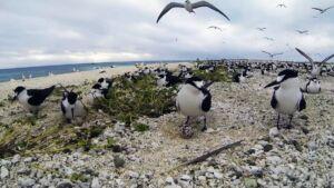 Coral Sea Marine Birds