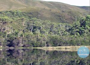 Tasmania - The Old River