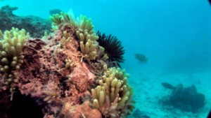 New Caledonia Reef
