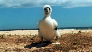 New Caledonia Marine Birds